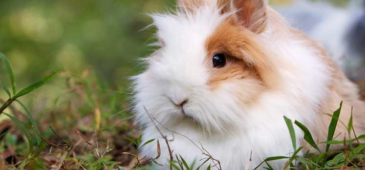 Roundup: The Best 6 Rabbit Hutches & What To Look For Before You Buy