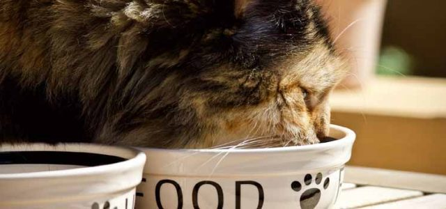 Cat Feeding Tips For A Balanced, Healthy Diet (Part 1)
