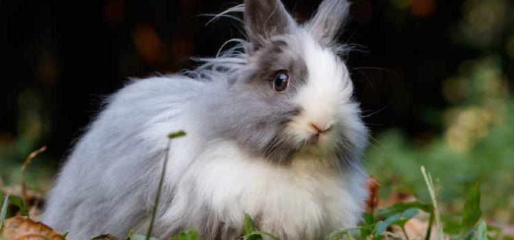 Routine Rabbit Care: Feeding, Grooming & Housing (Part 2)