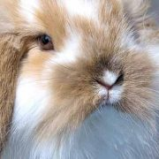 Routine Rabbit Care: Feeding, Grooming & Housing (Part 1)