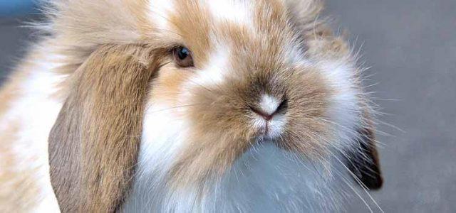 Routine Rabbit Care: Feeding, Grooming & Housing (Part 1)