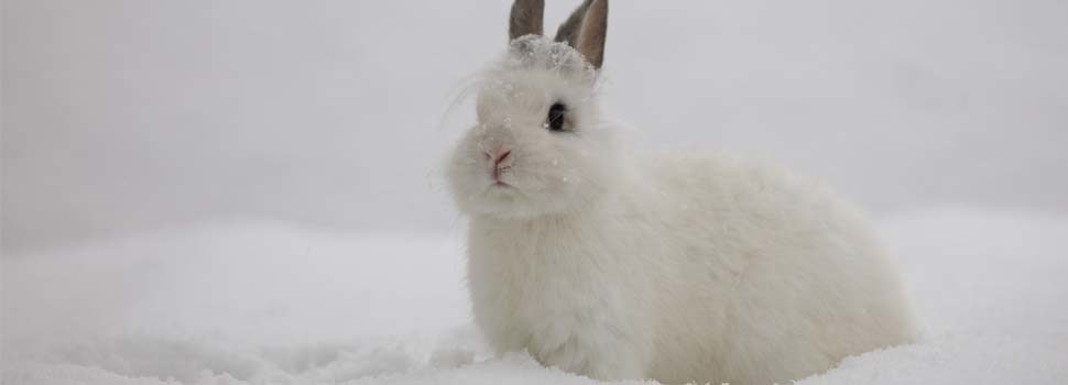 How Can I Keep My Rabbit Warm In Winter?