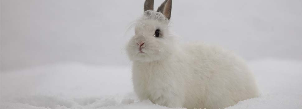 keep-rabbit-warm-in-winter