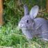 Rabbit Boredom Breakers To Keep Your Rabbit Happy and Entertained
