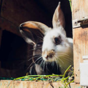 Outdoor Rabbit Hutch – 4 Key Tips, Location Advice & More