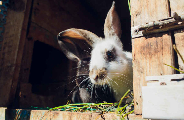 Best Outdoor Rabbit Hutch – 4 Key Tips, Location Advice & More