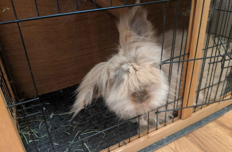 Complete Guide To Indoor Rabbit Cages – 6 Key Points You Should Know